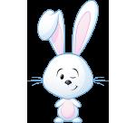 cotton-the-bunny-rabbit